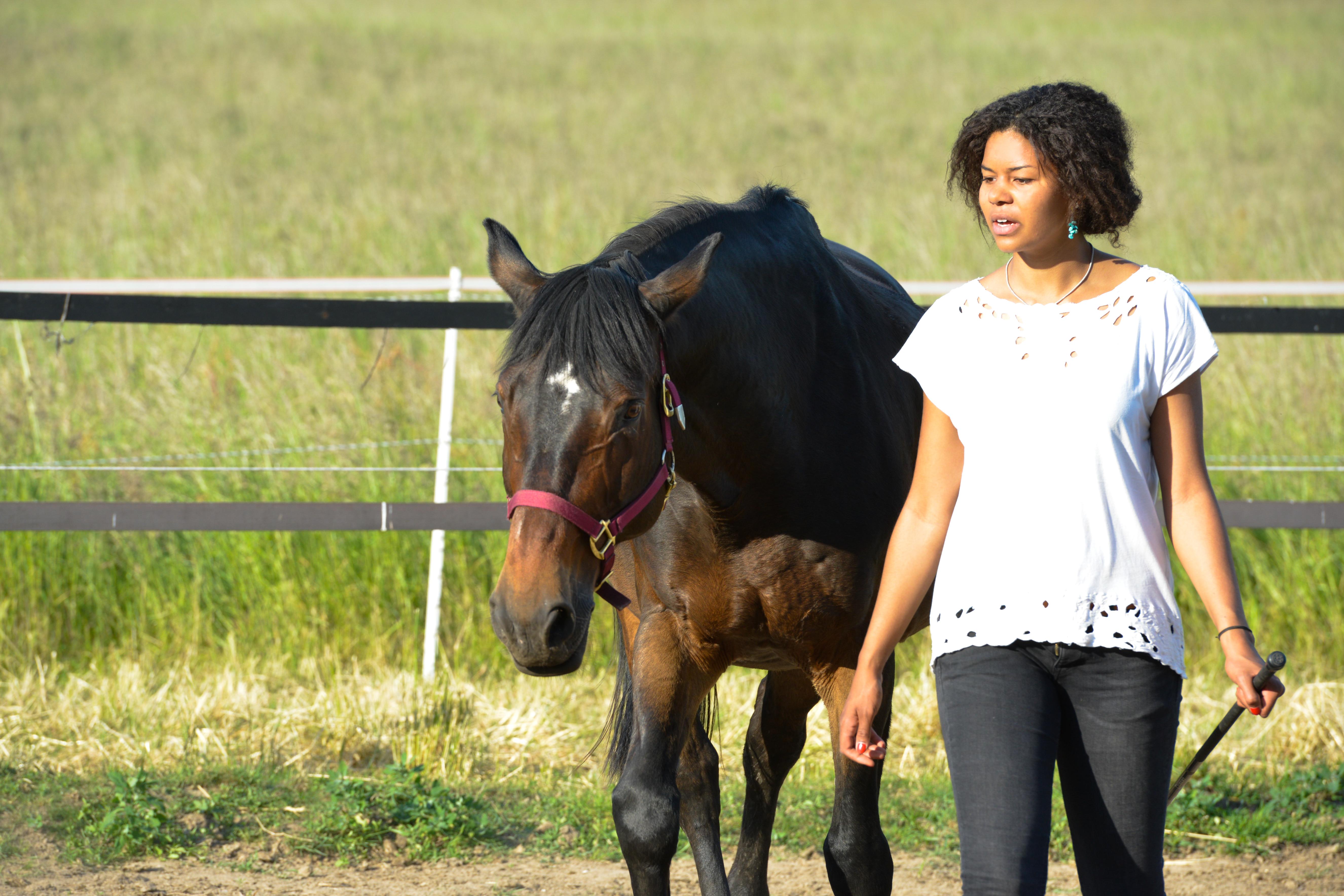Leadership Coaching mit Pferden